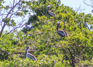 bird-nesting